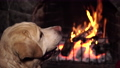 Dog near fireplace with burning fire 76366633