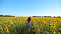 Carefree woman running through field with blooming sunflowers. Girl having fun jogging through meadow and enjoying summer. Scenic countryside landscape at background. Happiness and freedom concept 76372586