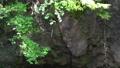 懸崖壁 常春藤 風景 76383473