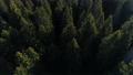 Aerial view of spruce forest in Montenegro 76385312