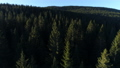 Aerial view of spruce forest in Montenegro 76385316