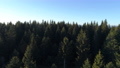 Aerial view of spruce forest in Montenegro 76385500