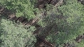 Vertical video of pine forest aerial view, slow motion 76386434