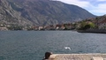 View of green mountains, fluffy clouds, pier, flying seagull and the coast of the Bay of Kotor 76390156