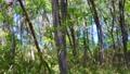 botanic, botanical, plant 76493603