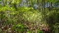 tender green, verdure, botanic 76493604