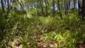 tender green, verdure, botanic 76493605