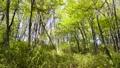 tender green, verdure, botanic 76493606