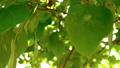b roll green leaves spring season 76514949