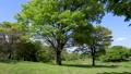 風に揺れる公園の丘の上の木、公園を散歩する人 76523489