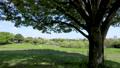 公園の丘の上の大きな木の下の日影でのんびりと遠くの風景を楽しむ 76523492