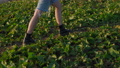 female tourist is walking over slope of mount at summer in golden hour, closeup of legs 76526102
