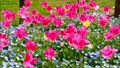 tulipa, tulip field, bloom 76537683