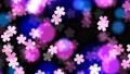 夜桜イメージ背景。ループ動画 76549726