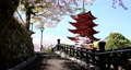 宮島の五重塔と桜吹雪 76550259