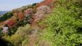 cherry blossom, cherry tree, aerial 76565987