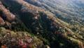 cherry blossom, cherry tree, aerial 76565992