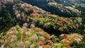 高峯山の山の山桜空撮 76565994