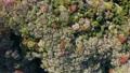 cherry blossom, cherry tree, aerial 76565997