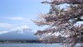 후지산과 벚꽃 76566629