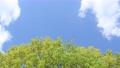 푸른 하늘과 신록의 나무 76566633