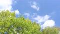 푸른 하늘과 신록의 나무 76566636