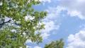 푸른 하늘과 신록의 나무 76566637