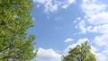 푸른 하늘과 신록의 나무 76566639