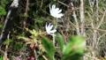 꽃, 플라워, 식물 76574780