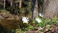 꽃, 플라워, 식물 76574782