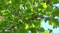 foliage, leaf, leafs 76576217