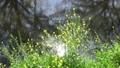 bloom, blossom, blossoms 76576221