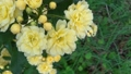 bloom, blossom, blossoms 76576225