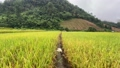 Doi Inthanon farm stay in the rice terraces in Chaing Mai, Thailand 76593605
