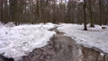 Thawed stream in the spring forest.  76598148