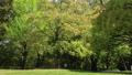 tender green, verdure, vegetation 76632837