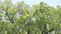tender green, verdure, vegetation 76632841