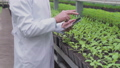 Male scientist in white coat typing on tablet in greenhouse, plant breeding 76649047