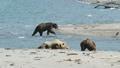 Brown bear on lake, Kamchatka, Russia 76649955