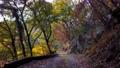 楓樹 紅楓 楓葉 76658023