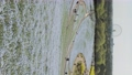 林草屬植物(一種園藝觀賞植物) 花朵 花 76669943