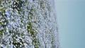 林草屬植物(一種園藝觀賞植物) 花朵 花 76669945