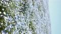 林草屬植物(一種園藝觀賞植物) 花朵 花 76669947