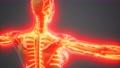 science anatomy of human Blood Vessels 76742656