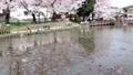 公園 池塘 鹹水湖 76744151