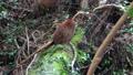 wild bird, canyon, valley 76761858