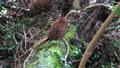 wild bird, canyon, valley 76761859