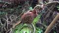 wild bird, canyon, valley 76761860
