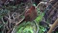 wild bird, canyon, valley 76761863