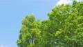 翠綠 鮮綠 真相 76781984